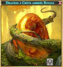 Dracène à crète ambrée Royal.png
