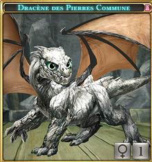 Dracène des Pierres commune.png