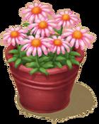 Gardenia'sFavoriteBlossoms.png
