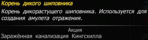 Корень дикого шиповника.png