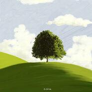 Kumira 나무