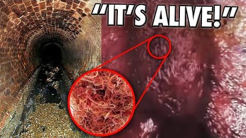 10 Unbelievable Things Found In Sewers