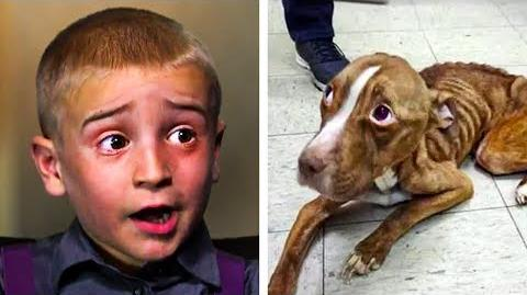 7-Year-Old Crowned Hero After Saving Over 1300 Dogs From Impending Death...