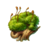 Moss tropics
