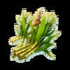 Reed tropics