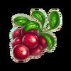 Cowberries