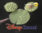 DisneyCreek