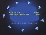 Toon Disney Animaniacs To Tiny Toon Adventures