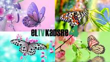 ElTVKadsre4 2010ID Butterfly