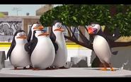 Pingwins 15