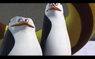 Pingwins 23