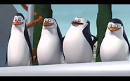 Pingwins1
