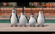 Pingwiny 3