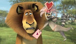 Zakochany-Madagaskar