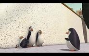 Pingwins 10