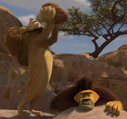 Lion drop rock at teetsi 3