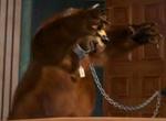 Bear Bee Movie4