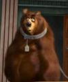 Bear Bee Movie9