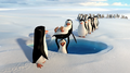 Penguins of Madagascar - Penguins having fun