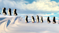 Penguins of Madagascar - Penguins walking