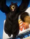 Bear Bee Movie11
