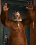 Bear Bee Movie2