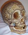 *Skull-Right 3-4