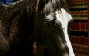 Badhorse2.jpg