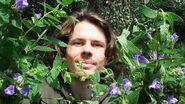 Psychoaktive Wildpflanze Und Cannabis Alternative- Sumpf-Helmkraut (Scutellaria Galericulata)