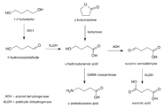 BDO-GBL-GHB metabolic pathway