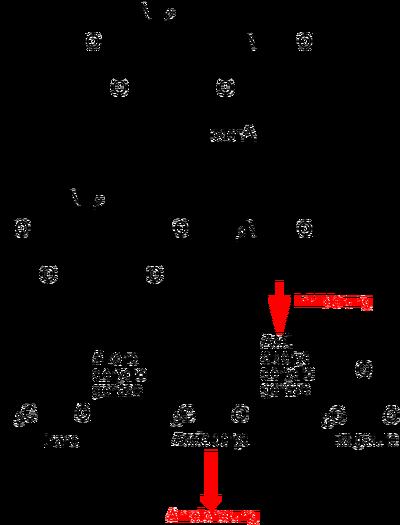 (S)-Coprine Metabolism.png