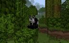 PandaFunnyEyes