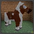 Bay tovero horse