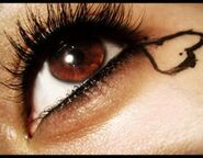 Brown Eye 5