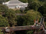Kew Gardens/Treetop Walkway