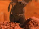 Кенгуровая мышь