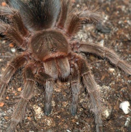 Arachonomicon; the Book of Spiderkind (4e Sourcebook)/All About Spiderkind