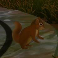 Dwarrows Brown Squirrel