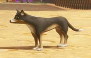 Dwarrows Shepherd Dog