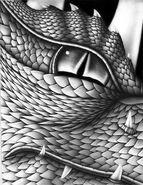 Oko glaedra paolini