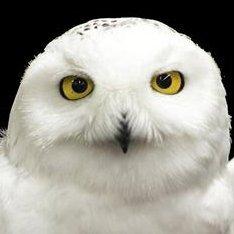OwlthorpeGryph