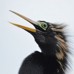 Birds Forever's avatar
