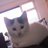 Stormstarthecat's avatar