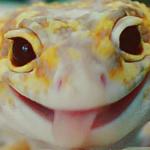 XcaliburZA's avatar