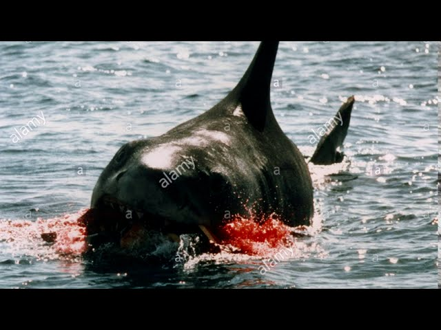 Jaws (Deleted Scenes) Rare Footage and Photos