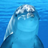 Dolphinflavored's avatar