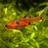 AlixAquario's avatar