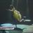 A Fig Newton's avatar