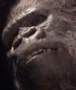 Bruno Gorilla Form