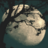 WaterFly24's avatar